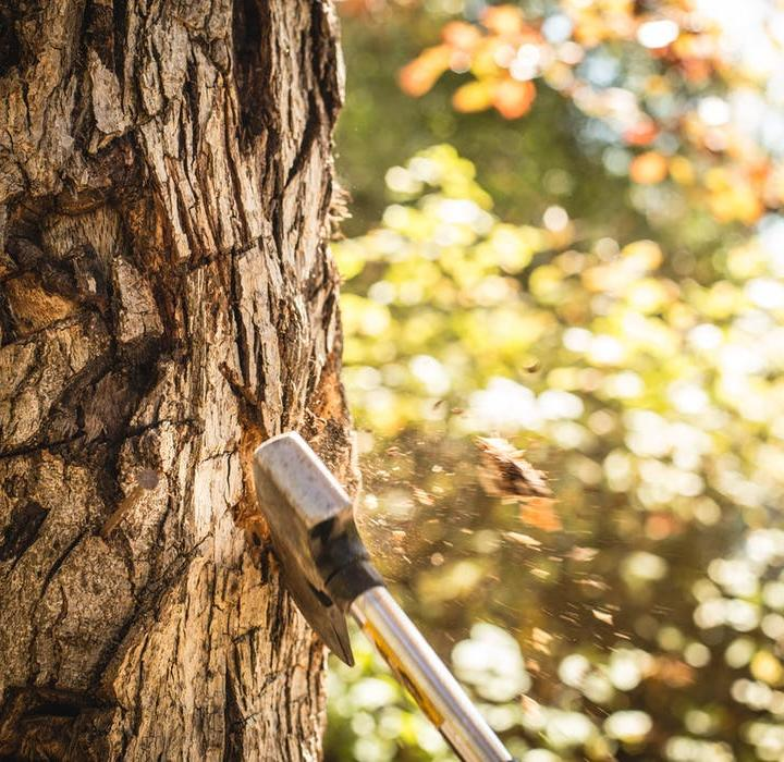 When to Implement a Tree Cutting Service